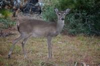 Deer Friend