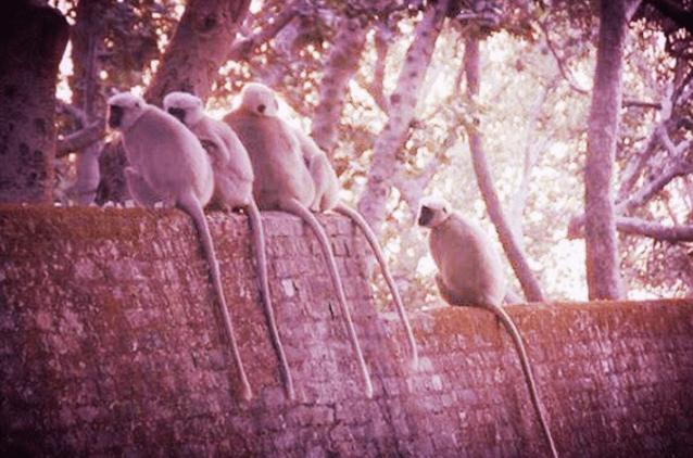 Monkeys in Rishikesh