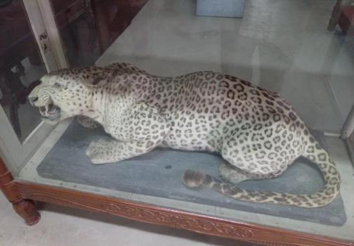 Government Museum Alwar
