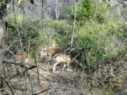 Tiger Safari Sariska