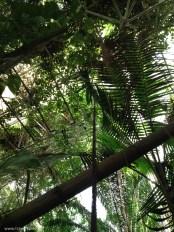 biosphere rainforest 4