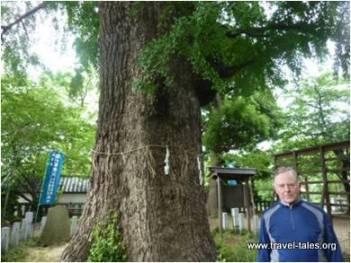 next-to-tree