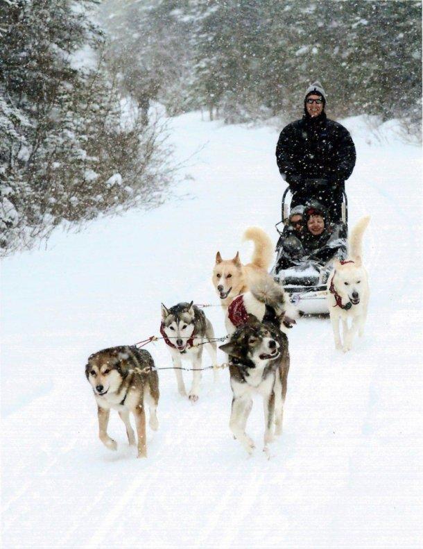 dog sledding alberta holiday