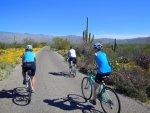 Cycling Saguaro National Park Arizona