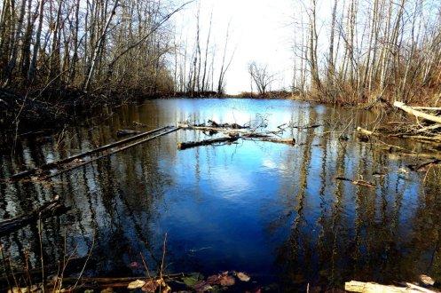 Prairie swamp