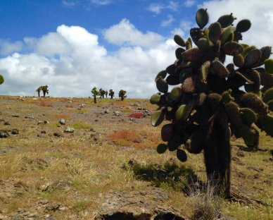 Baren landscape for the animals on Galapagos