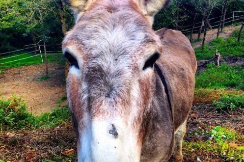 donkey hotel osterria dell' orcia