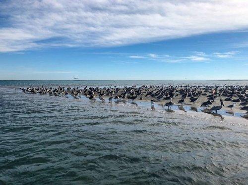 Birdwatching Magdalena Bay