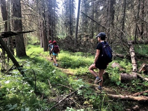 Brown lowery hiking trail