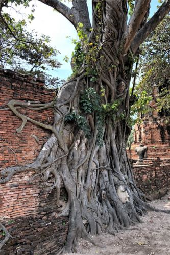 Buddha face in tree roots Thailand