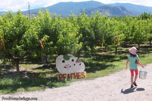 Child in peach orchard