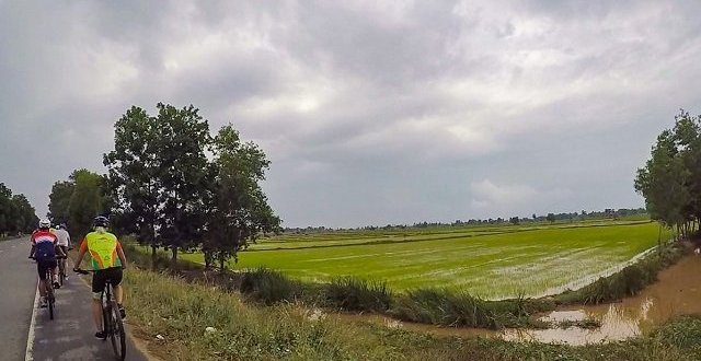 Cycling beside Cambodian rice field