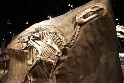 Dinosaur fossil Drumheller signature travel experience