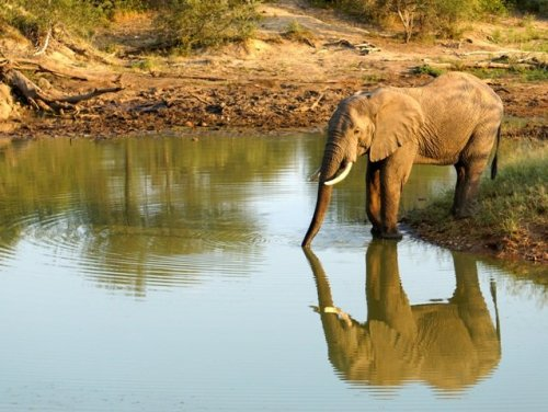 Elephant reflection in water hole