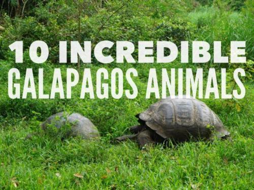 Amazing animals of Galapagos Islands