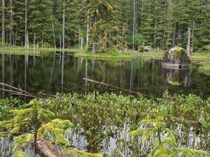 Glacier Bay Lodge hike reflecting pond