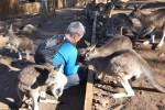 Bonorong Wildlife kangaroos
