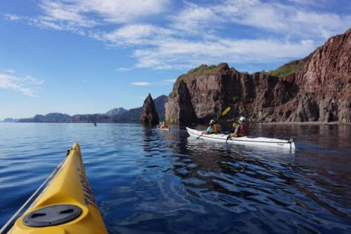 kayak with the sea of cortez dolphins
