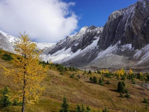 Larch trees places to visit in Canada
