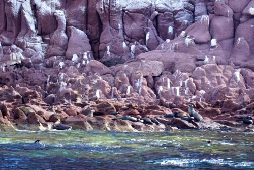 los islotes sea lion colony