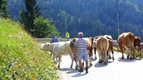 slovenia roads