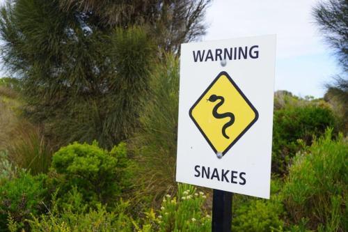 Australia signs snake