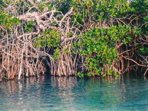 Ecological tour Mayan Riviera
