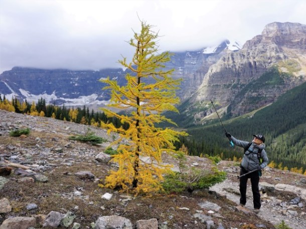 White Mountain Adventures larch hike guide