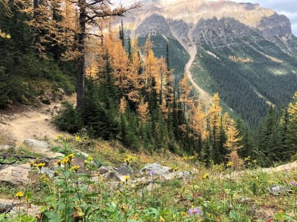 Wildflowers Fall Banff National Park