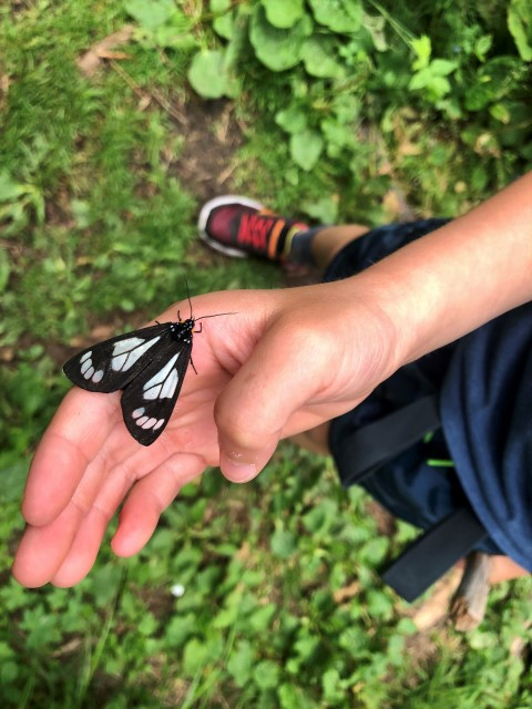 butterfly on boy's hand