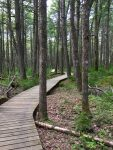The Boardwalk through The Old Growth Hemlock Forest