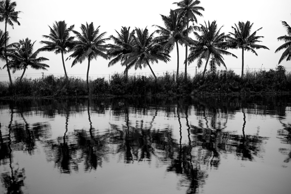 Palm trees on reflecting on the Kerala Backwaters.