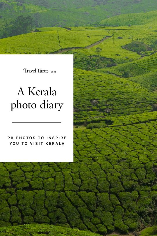 29 photos that capture the romance and the reality of Kerala in India. From the tranquil backwaters to lush green hills of tea. Read the full article at traveltarte.com