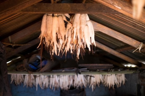 Ears of corn hanging from a roof in Nepal