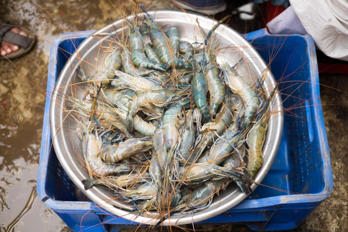 A tray of fresh shrimp