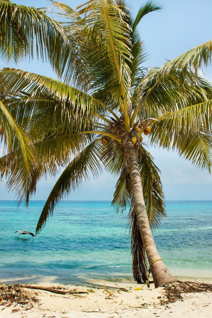 Laughing Bird Caye, Belize - Must visit!
