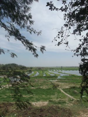 Views of the surrounding paddy fields from the Killing Fields