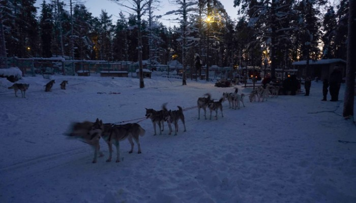 Husky dog rides in Lapland