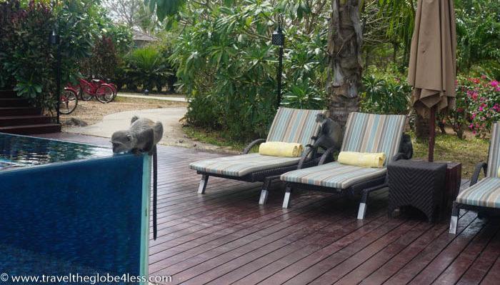 Residence Zanzibar monkey