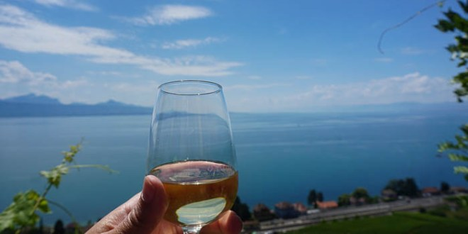 The wine terraces near Lausanne