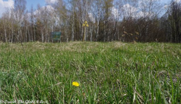 Woodland in the Chernobyl exclusion zone