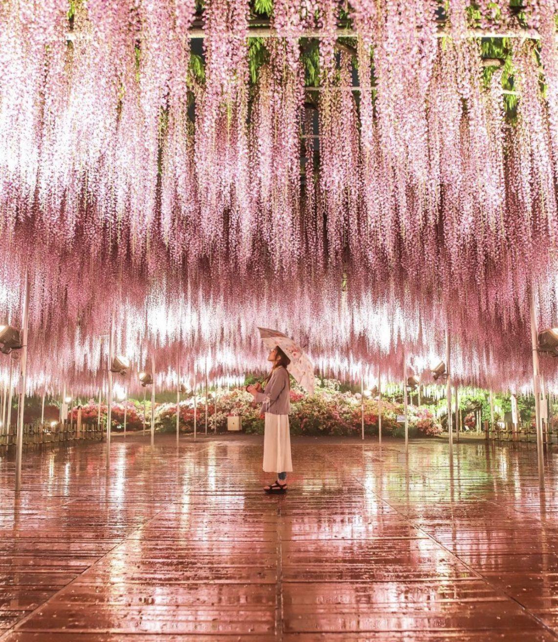Il parco giapponese di Ashikaga ragazza sotto glicini rosa ashikaga Il mio viaggio in Giappone traveltherapists blog giappone elina e marzia blogger miglior blog di viaggio