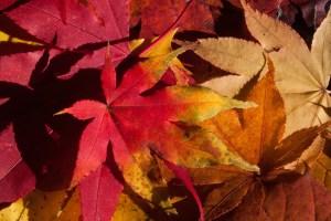 foliage sfumature foglie rosso giallo traveltherapists
