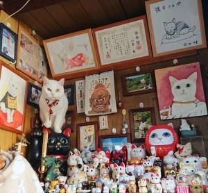nyan nyan ji koyuki kyoto il mio viaggio in giappone traveltherapists santuario gatti deco