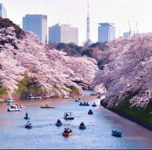 il mio viaggio in giappone traveltherapists tokyo hanami 2021 shiba park