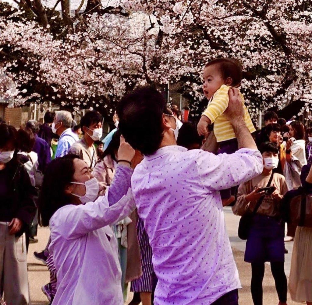 coppia giapponese con in braccio il figlio sotto i fiori di ciliegio