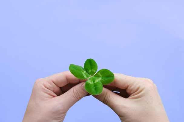 quadrifoglio verde tenuto fra due mani Cose che non sai sulla Corea del Sud