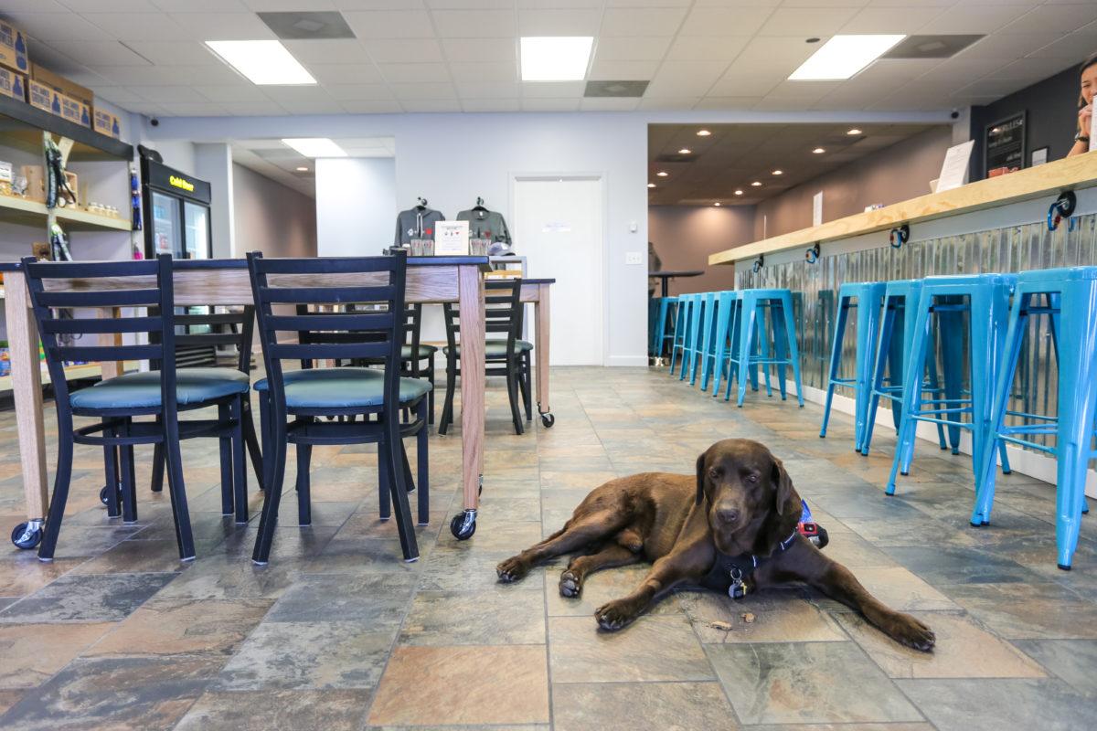 A Dog Friendly Visit To Durham North Carolina Travel To Blank