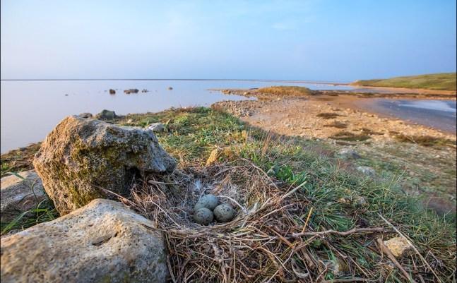 Nature reserve Opuk, Crimea