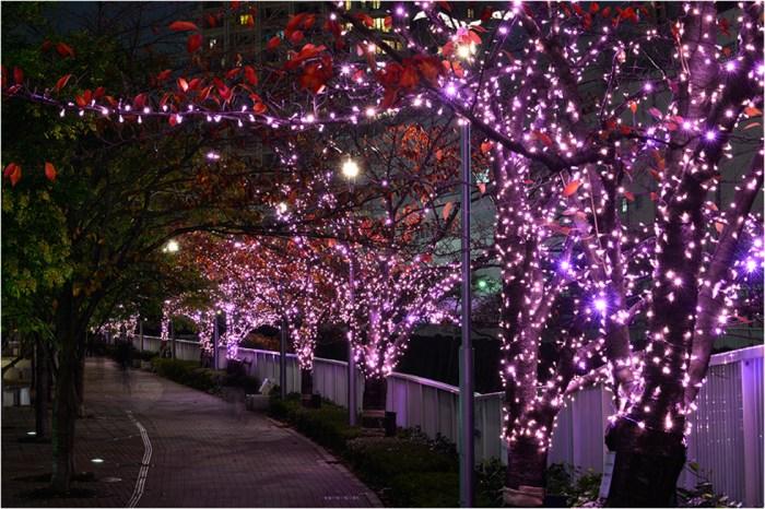 美不勝收!目黑川「冬櫻」。戀人燈下漫步   東京景點筆記